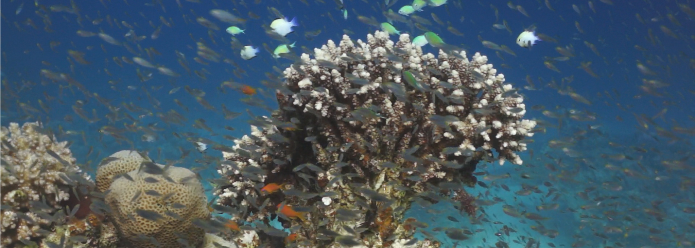 Coral recovery